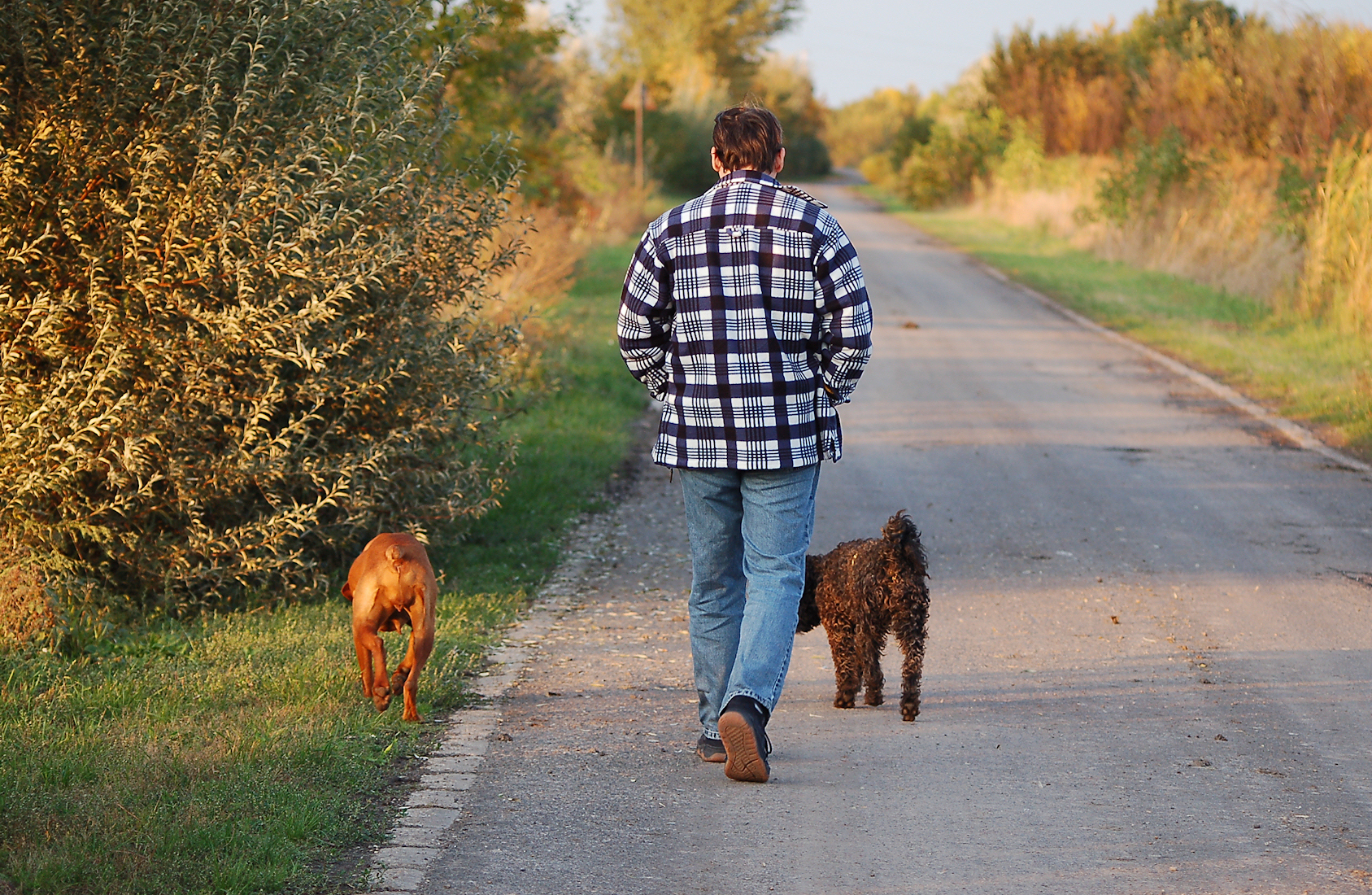 How Much Money Can You Get From Dog Walking